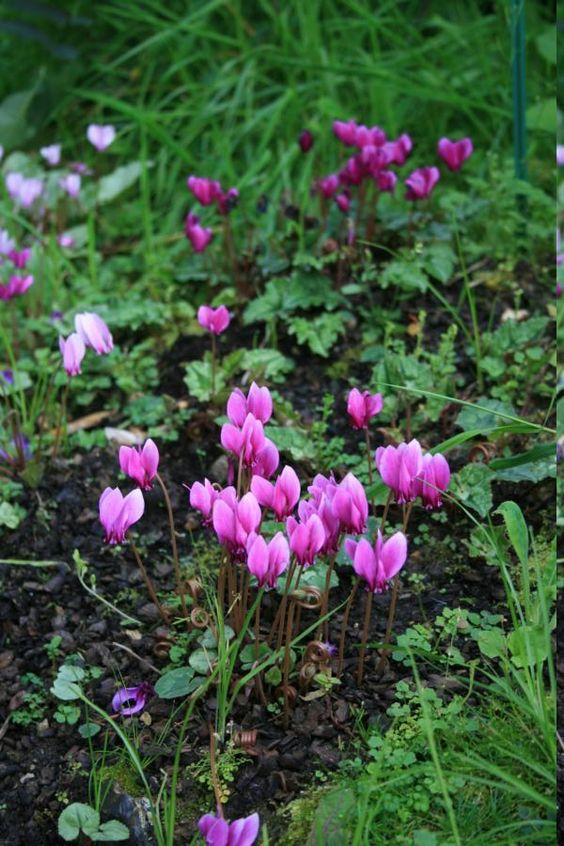 full shade garden flowers outdoor living pinterest