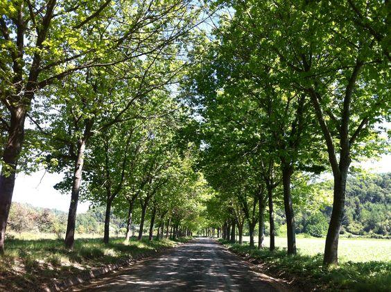 Lindos árboles en la entrada