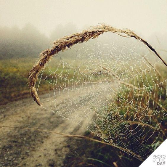 spiderweb scenic