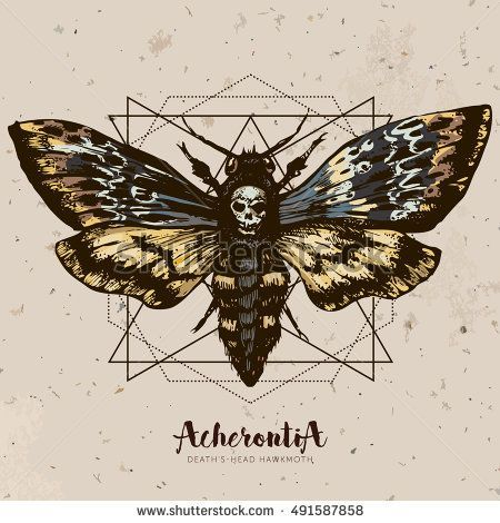 Death S Head Hawk Moth And Sacred Geometry Lines Hand Drawn Vector Ink Illustration In Trendy Engraved Style Moth Design Tattoo Sketch Vintage Drawing For T Mit Bildern Death Moth Tattoo Motten Tattoo