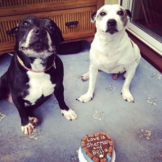 """Great job on this cake! Let's eat it! Let's eat it now! Please?"" 
