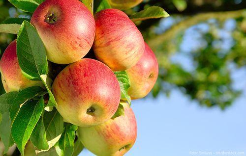 So Geht Obst Pflanzen In 2020 Pflanzen Apfel Apfelbaum
