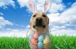 Doggie egg hunts in Chicagoland #easter