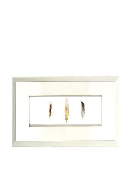 Aviva Stanoff Framed Set of 3 Ombre Fowl Feathers, http://www.myhabit.com/redirect/ref=qd_sw_dp_pi_li?url=http%3A%2F%2Fwww.myhabit.com%2Fdp%2FB00LCMRCR4