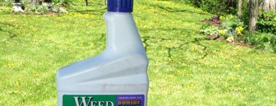 Crabgrass Preventer vs Weed Killer