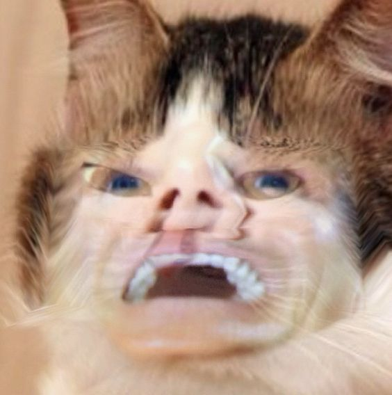 I got an app called face fusion. Hint- never mix Gordon Ramsay with a cat. Ever.