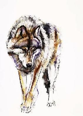 Mark Adlington Loup Aquarelle Art Animalier Animaux Abstraits
