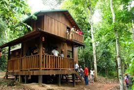 casa de selva - Pesquisa Google