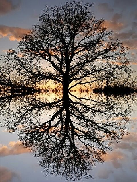 TREE OF LIFE: Love the perfect reflection, could be treated similarly to SUNRISE TREE. If cut to square, either edges would need to be built, or we could lose the bottom half or 2/3rds of reflection, or lose equal parts tree and reflection. (Edge bushes could be cleaned up).: