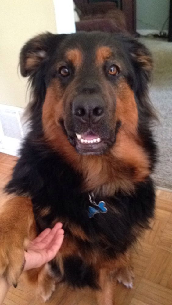 And goofy Wilson who was rescued from a high-kill shelter.   42 Dogs Who Found Their Forever Homes In 2015