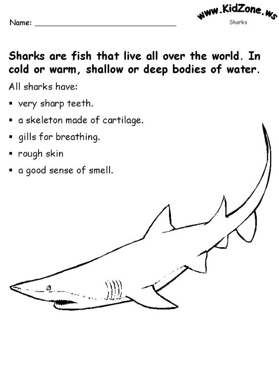 Printables Kidzone Worksheets shark activity sheet about sharks ocean science pinterest activities kidzone speech class summer autism teaching stuff classroom learning 2