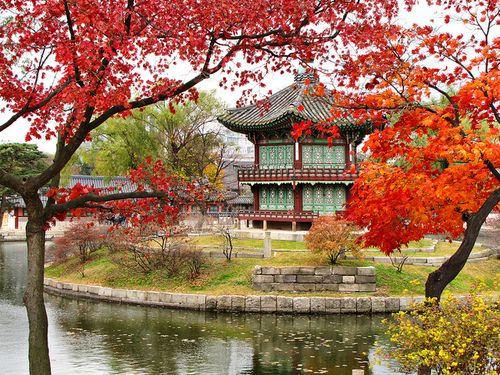 Image result for gyeongbokgung palace in fall