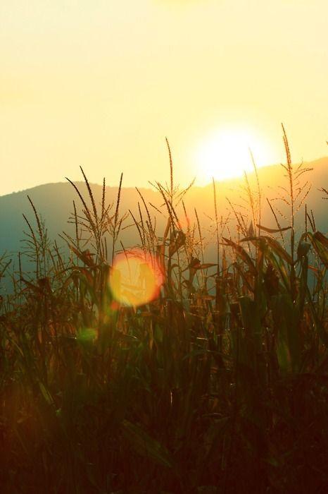 ✿⊱╮PRECIOSA SOLITUDE ✿⊱╮ A solitude é muito positiva, é uma presença, transbordante. Sente-se tão pleno de vida que pode preencher o universo inteiro com a sua presença, e não há nenhuma necessidade de ninguém... Osho