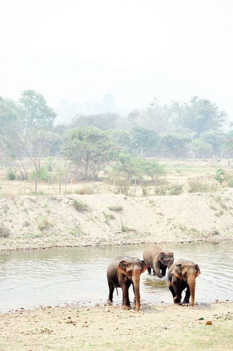 CM Elephant