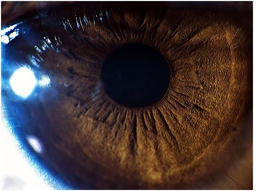 Saúde, Corpo e Mente: Alimentos bons para os olhos
