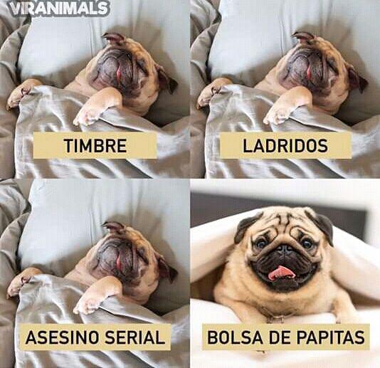 Pin By Noa On Memes Y Demas Bulldog French Bulldog Animals