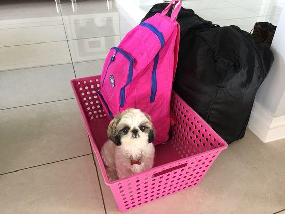 A cadelinha Mel pronta para mais uma viagem!