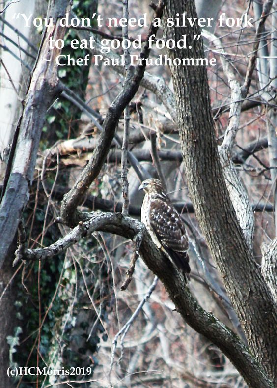 a hawk in a tree with a quote by Chef Paul Prudhomme