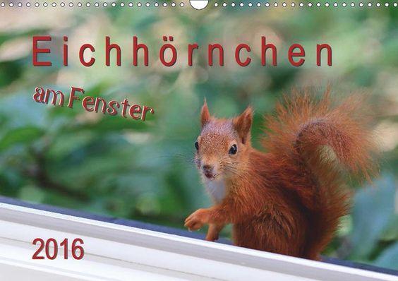 Eichhörnchen am Fenster - CALVENDO Kalender von Tobias Freise