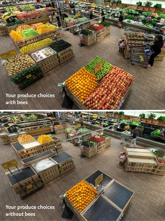 In an effort to promote awareness about declining bee populations, a market removes all the food that relies on bees from its produce department.: