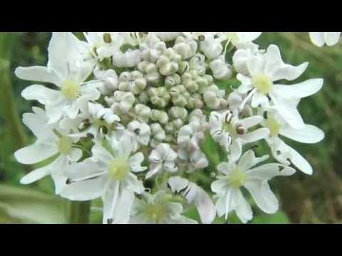 46 Plante medicinale ideas   remedii naturiste, remedii naturale, sănătate