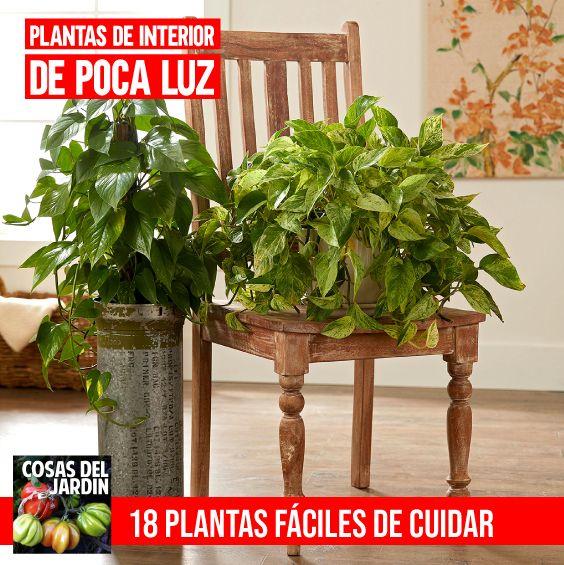 Planta Jacinto Es De Sol O Sombra