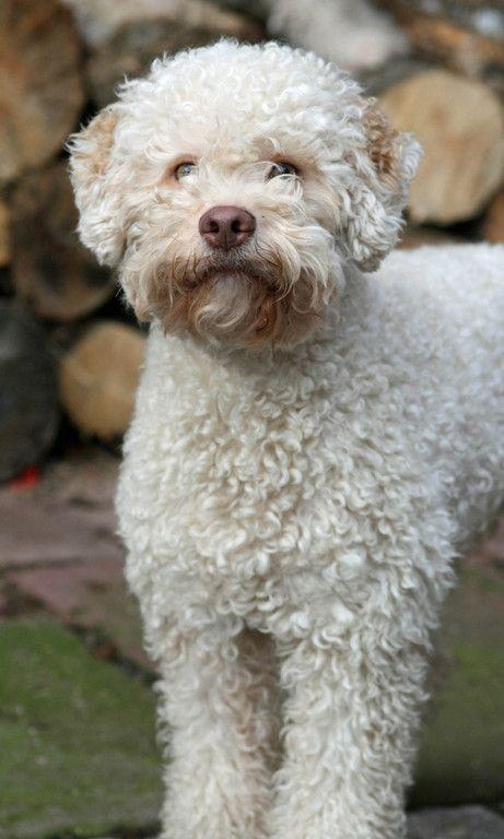 Fotoalbum Hundebilder Tiere Haustiere