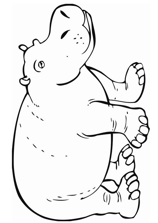 Hippopotamus Coloring pages and