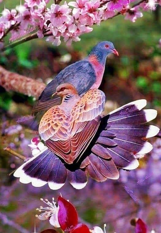 Nature Birds Beautiful Birds Birds Pretty Birds