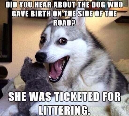 Dog who have birth on side of the road