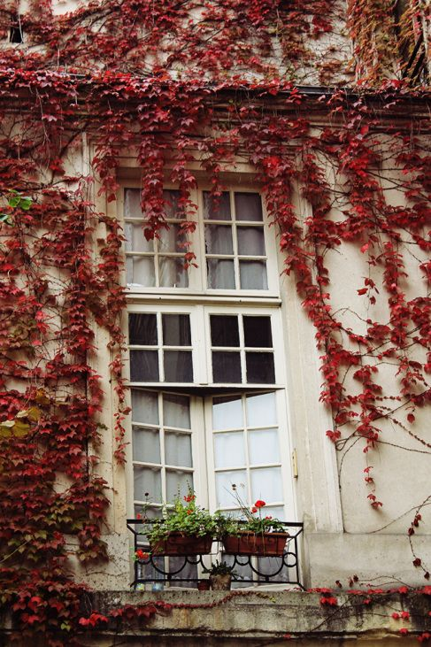 Red climbing ivy ~ Fall in Paris. #vinecovered #fall inspiration