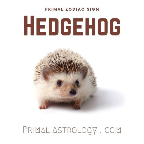 Primal Zodiac Sign Of Hedgehog In 2020 Primal Astrology Zodiac Signs He is best known for starring as ricky underwood on the abc family teen drama series the secret life of the american teenager from 2008 to 2013. pinterest