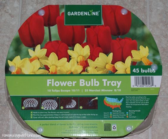 from Aldi : My Garden : Pinterest : Trays, Bulbs and Flower
