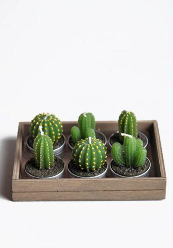 Si olvidas #regar incluso los #cactus puedes tenerlos en #vela.
