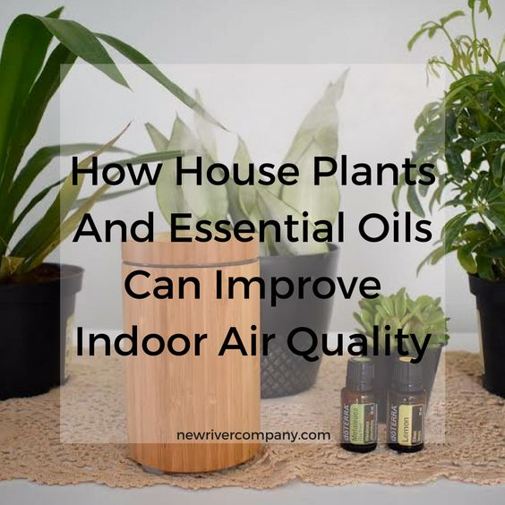 How House Plants And Essential Oils Can Improve Indoor Air Quality -