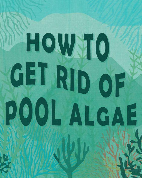 How To Get Rid Of Pool Algae Swimming Pool Care Pinterest How To Get Pools And Swimming Pools