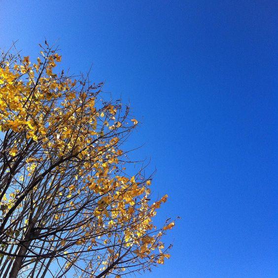 Bom dia como este não é de hoje mas é mais alegre! #happiness #azul #amarelo #outono #igersoporto