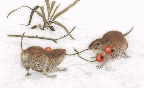 Petites Souris dans la Neige: