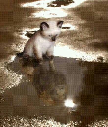 in every kitten has a lion in them ready to break out roar