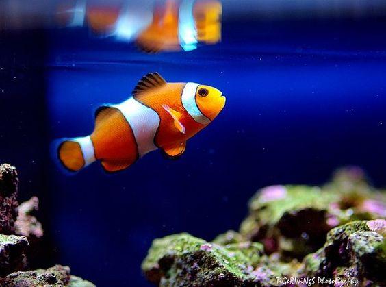 Nemo!!