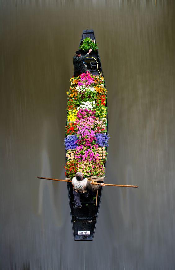 Flower market, Floating flowers and Flower on Pinterest
