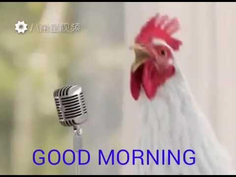 Pin By Eliane Alves On Kafedes Good Morning Song Morning Songs Good Morning Meme