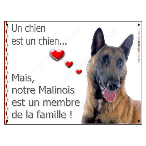 animaux divers chats chiens - Page 2 Cabc5b33b78a284c8a13271fc7cba18f