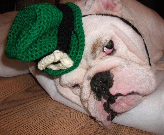 ...my future bulldog will be wearing this hat on future St. Patrick's days...