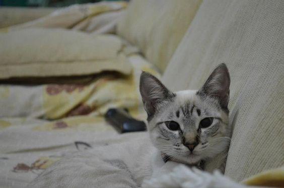 Luna no sossego do seu sofá!!!