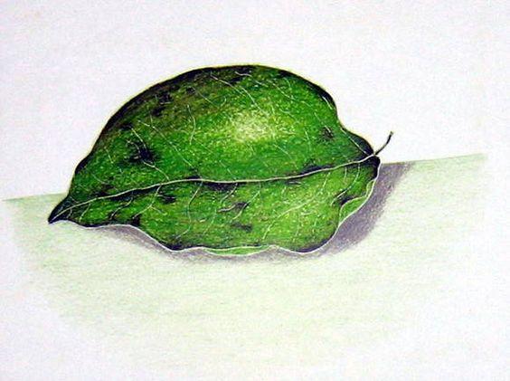 como desenhar folhas - Pesquisa Google