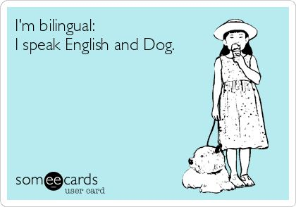 I'm bilingual: I speak English and Dog. Pin if this rings true for you!: