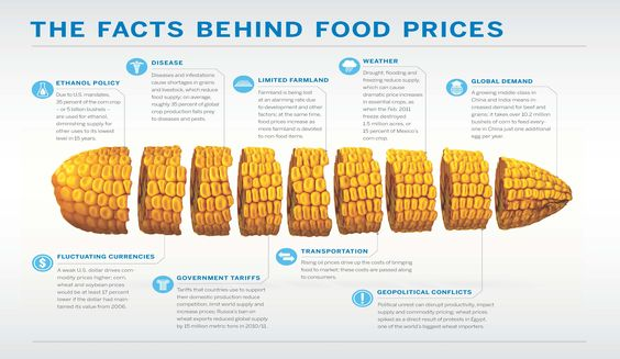 The Facts Behind Food Prices