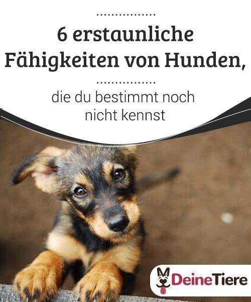 Pin Auf Good To Know Hundewissen