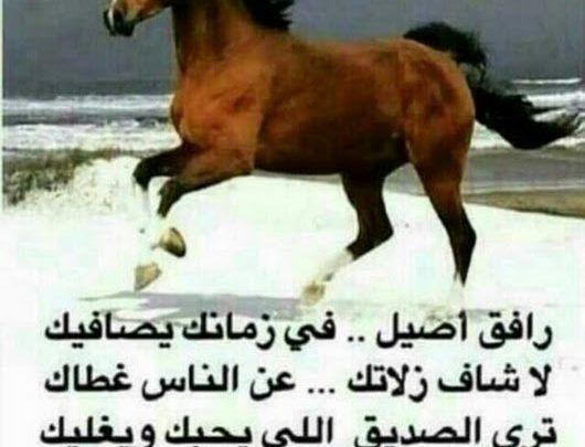 أبيات شعر مدح الملوك والأمراء لمجموعة من شعراء العرب Animals Horses Poster